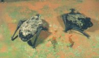 J. van der Kooij: Skimmelflaggermus (v) og nordflaggermus (h)